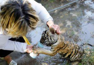 شاهد كيف تحتمي الحيوانات من الحر في حديقة بغداد